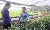 TP Bắc Giang ứng dụng công nghệ cao trong nông nghiệp: Ưu tiên phát triển hoa, rau an toàn