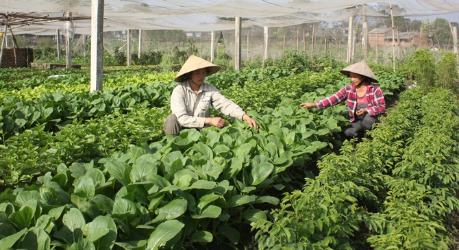 TP Bắc Giang, ứng dụng, công nghệ, nông nghiệp, ưu tiên, phát triển, rau an toàn