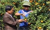 Tỷ phú trồng cam giàu sáng tạo