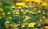 Mùa xuân, hoa và người