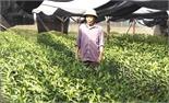 Cựu TNXP Dương Văn Chích: Dám nghĩ, dám làm