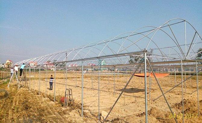 Làm nhà lưới,  trồng rau,  an toàn