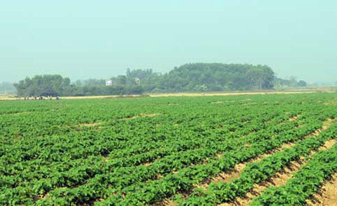 Lạng Giang, dồn đổi 1.280 ha,  đất nông nghiệp