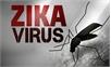 Đã có 6 trường hợp mắc Zika tại Đồng Nai