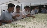 Việt Yên đẩy mạnh ứng dụng công nghệ cao trong sản xuất nông nghiệp