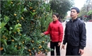 Bố trí 14 điểm bán hoa,  cây cảnh tại TP Bắc Giang