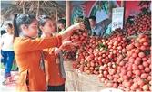 Chuỗi giá trị khi nông dân bắt tay doanh nghiệp
