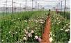 Nông nghiệp công nghệ cao - Kinh nghiệm của Lâm Đồng