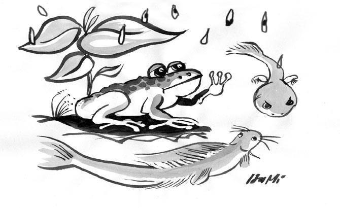 Mưa rơi, trong vườn