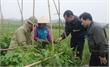 Củng cố tổ chức cơ sở đảng ở Lục Nam: Khắc phục từng khâu yếu
