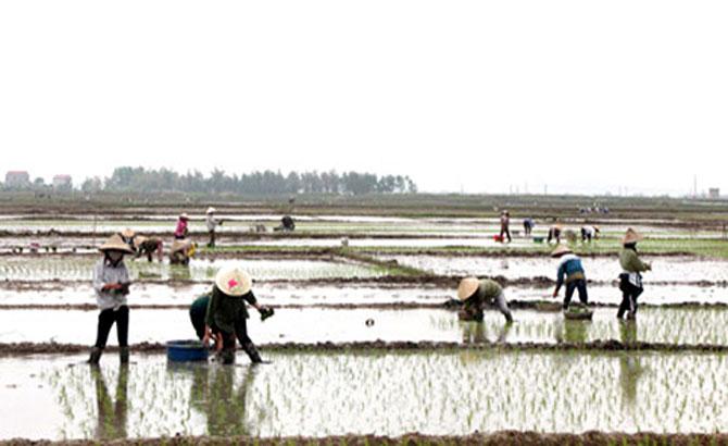 Gieo trồng 2,8 nghìn ha cây vụ xuân