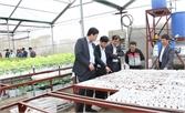 Việt Yên: Mở rộng diện tích trồng rau thủy canh
