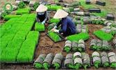 Hiệp Hòa: Thí điểm sử dụng mạ khay, máy cấy lúa