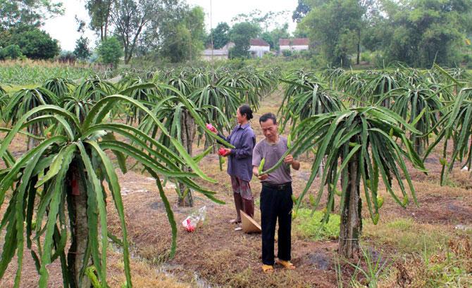Bac Giang's Tan Yen district aims for 50 hi-tech farms in 2020
