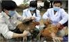 Chủ động phòng chống dịch cúm A(H7N9)