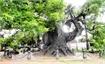 """Ancient """"Da Huong"""" tree tells story"""