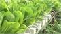 Việt Yên đẩy mạnh ứng dụng công nghệ cao vào sản xuất rau, củ, quả