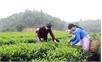 Ứng dụng nông nghiệp công nghệ cao: Doanh nghiệp đóng vai trò then chốt