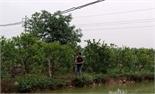 Mở rộng ồ ạt diện tích cây ăn quả: Nhiều rủi ro