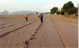 Yên Dũng: Sạ lúa nhanh nhờ  chỉnh trang đồng ruộng