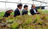 Nhân rộng các mô hình nông nghiệp ứng dụng công nghệ cao