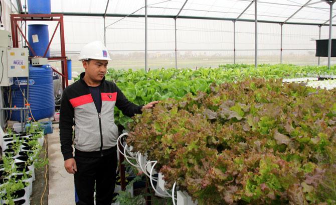 Hợp tác xã,  Hoài Long, sản xuất, rau sạch, thủy canh