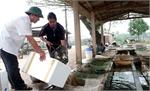 Bắc Giang: Hối hả vào vụ cá mới