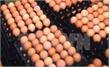 Nhà máy trứng gà sạch công nghệ cao đầu tiên tại Việt Nam