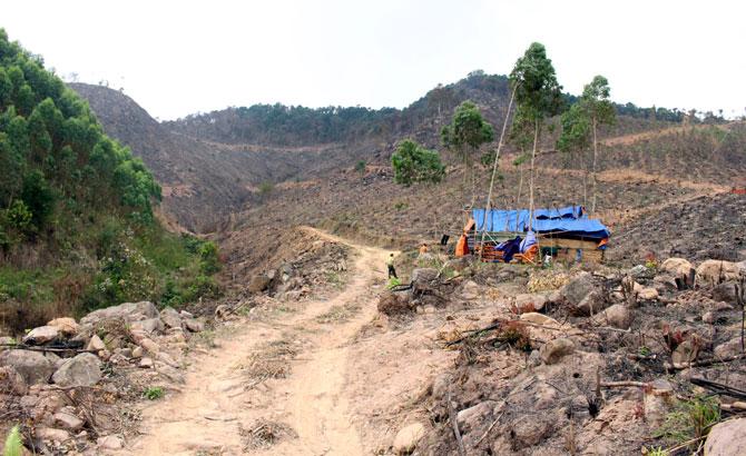 Lục Nam, nỗ lực, bảo vệ rừng,  tự nhiên