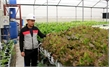 Hydroponic vegetable gardening at Hoai Long cooperative