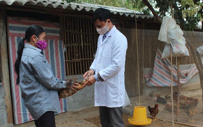 Chủ động, ngăn chặn vi rút cúm, bảo vệ đàn gia cầm