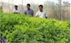 Bắc Giang: Khởi động nông nghiệp công nghệ cao