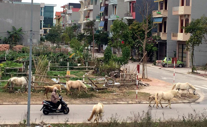 Không chăn thả,  gia súc, khu dân cư