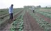 Yen Dung district builds six safe agricultural production models