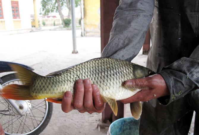 đàn cá, sinh sôi,  Phi Mô, Lạng Giang, Trung tâm,  Giống thủy sản