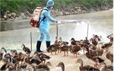 Cấp 400 lít hóa chất phòng, chống dịch cúm A (H7N9)