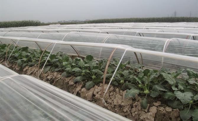 Bảo vệ, cây trồng, thời tiết,  nồm ẩm