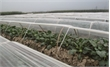 Bảo vệ cây trồng trong thời tiết nồm ẩm
