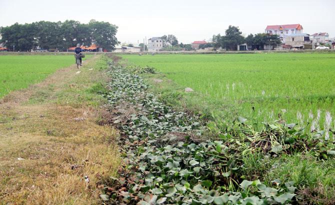 Bờ xôi ruộng mật, ô nhiễm,  chất thải, hoạt động, chăn nuôi