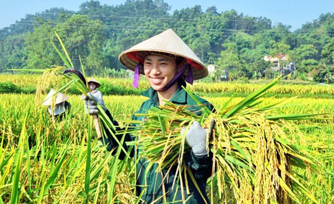 Tầm nhìn, kinh doanh, lúa gạo, xuất khẩu, Việt Nam