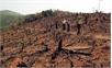 Gia tăng các vụ đốt, phá rừng