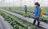 Chuyển đổi cơ cấu cây trồng: Hướng tới phát triển bền vững