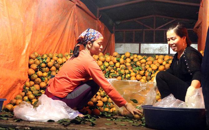 chợ Mía, Tân Mỹ, TP Bắc Giang, hoa quả,  tập kết, thương lái
