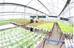 Nông nghiệp ứng dụng công nghệ cao