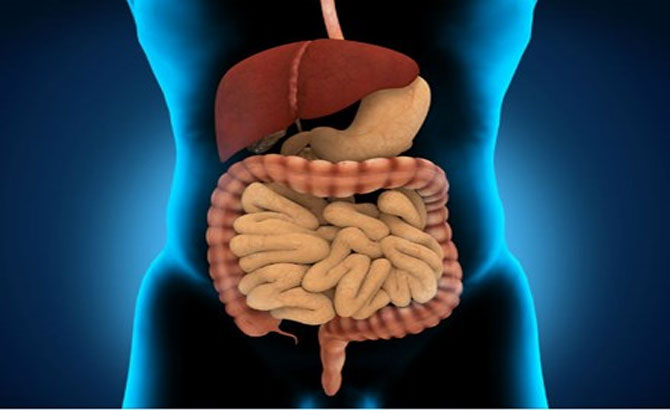 hệ tiêu hóa, khỏe mạnh, chế độ ăn