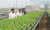 Sản xuất thử nghiệm dung dịch dinh dưỡng trồng rau thủy canh