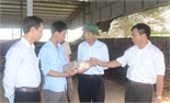 Bí thư Tỉnh ủy Bùi Văn Hải kiểm tra tình hình kinh tế-xã hội tại huyện Lạng Giang