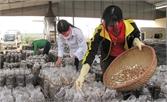 Bắc Giang: Hỗ trợ gần 5 tỷ đồng cho sản xuất nấm