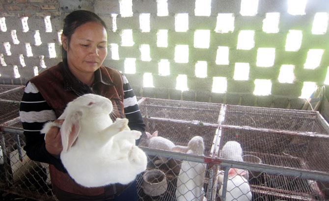 Hiệu quả, nuôi thỏ, hợp tác xã, Thành Lộc, Việt Yên
