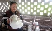Hiệu quả từ nuôi thỏ